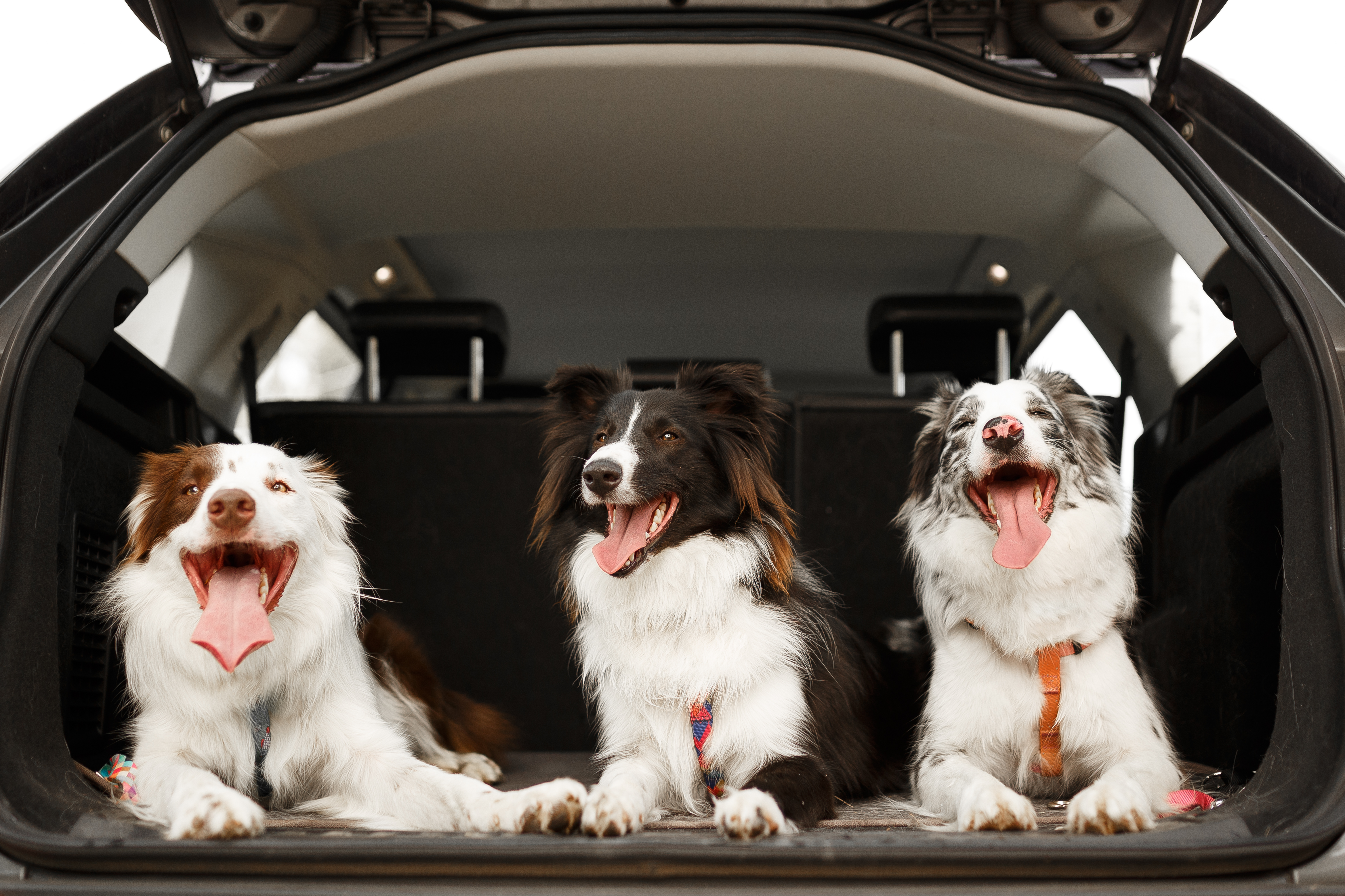 three dogs sitting comfortably in the cargo space